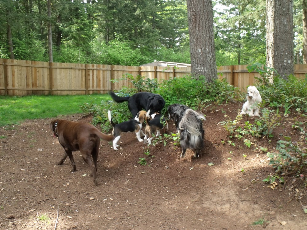 Sandy s dog boarding kennels pet sitting 18921 s for Dog boarding places near me