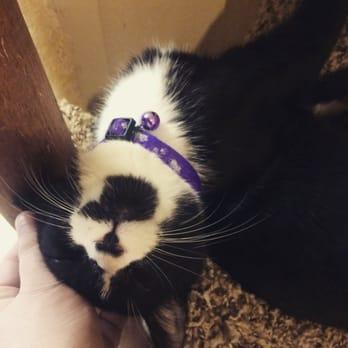 Cat Rescue Waco