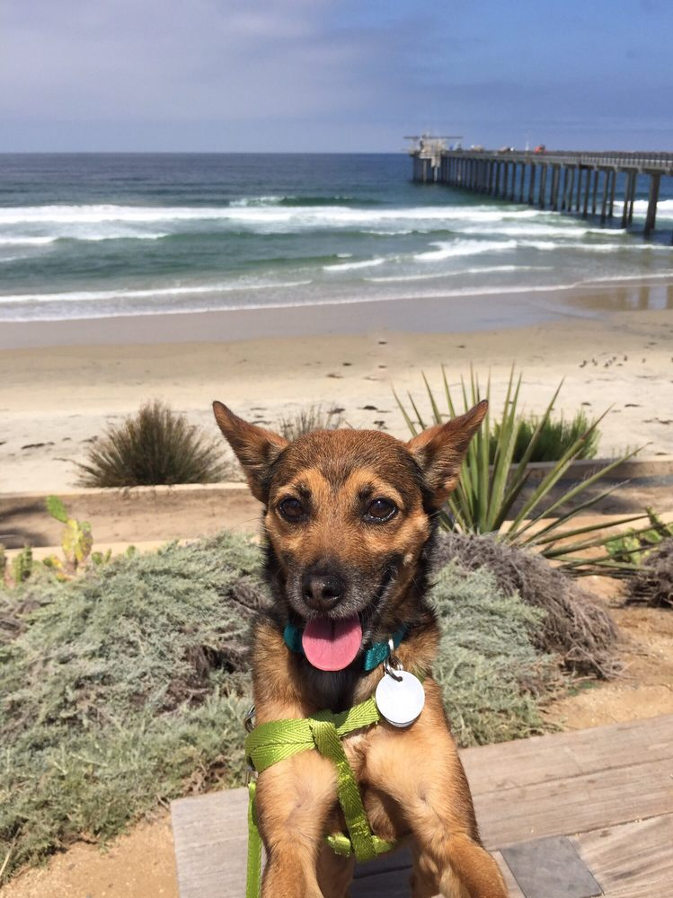 Dog Rescue Without Borders: Carlsbad, CA