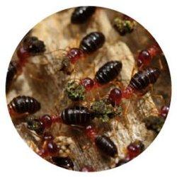 The Best 10 Pest Control Near Predator Pest Eliminators In Winnipeg