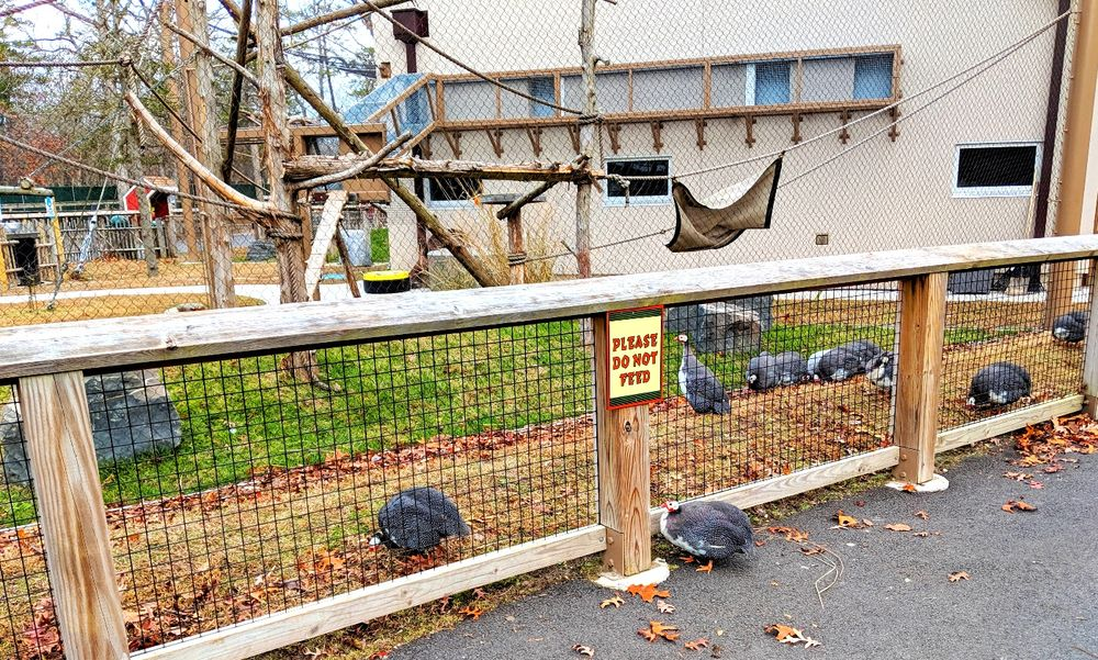 Cape May County Park & Zoo: 707 Rt US 9 N, Cape May Court House, NJ