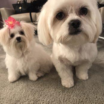 Mary s pet salon 41 photos 31 reviews pet groomers for A perfect pet salon