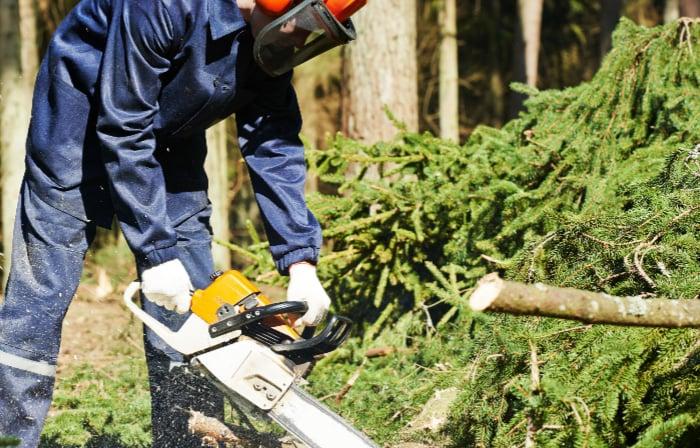 Rocky's Tree Service: 539 Klondike Rd, Charlestown, RI