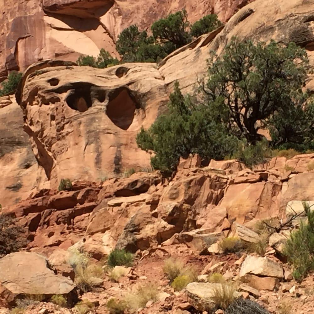 "Colorado National Monument Fruita Co: Wingate Sandstone With ""windows"""