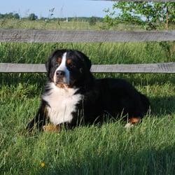 Country Comfort Inn Your Pets Getaway Pet Groomers 1128