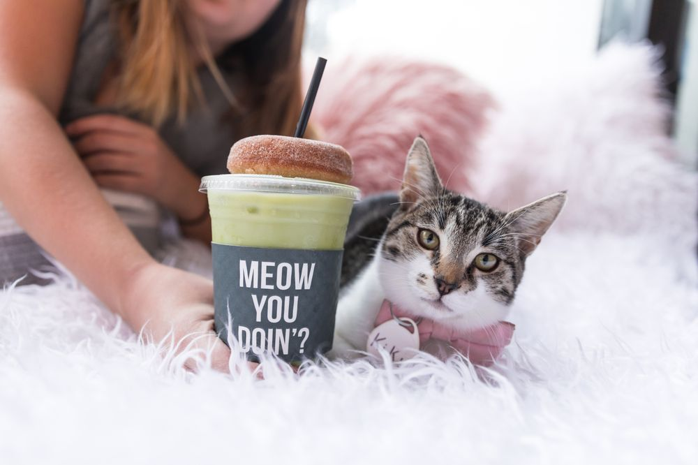 Crumbs & Whiskers - Kitten & Cat Cafe