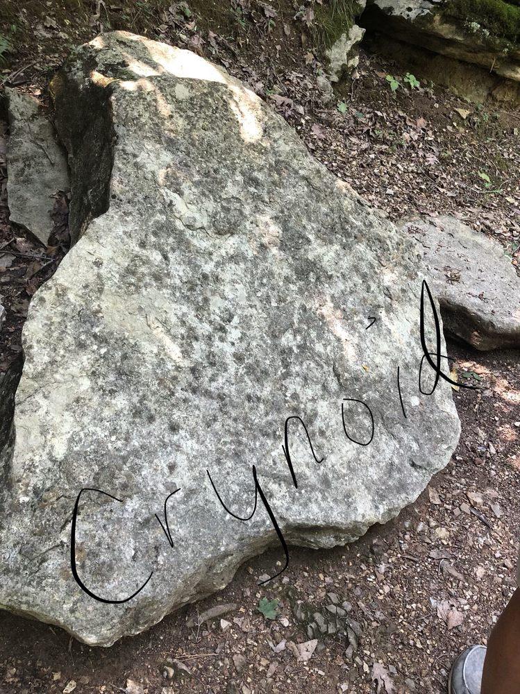 War Eagle Cavern: 21494 Cavern Rd, Rogers, AR