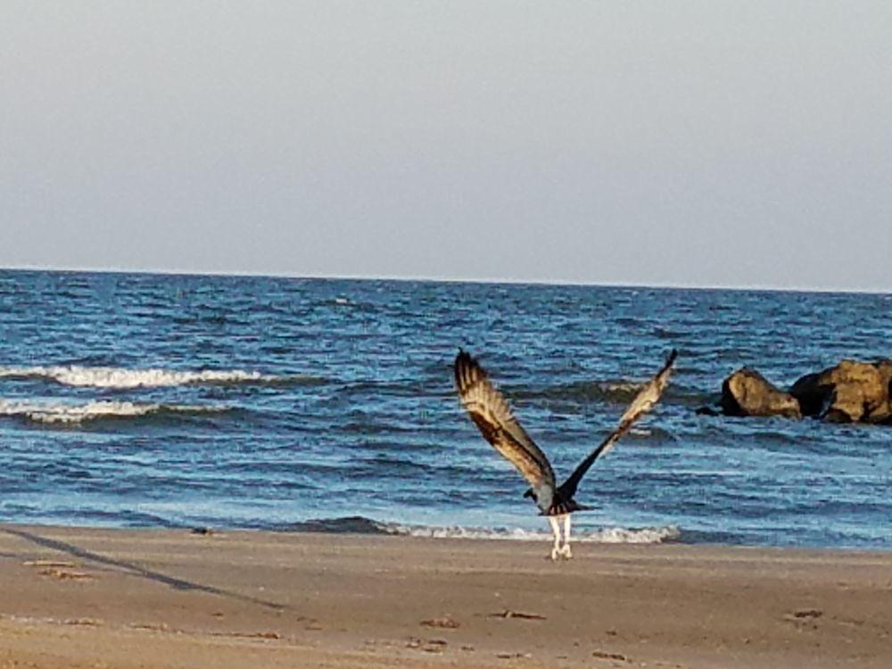 Cajun Tide Beach Resort: 3032 Hwy 1, Grand Isle, LA