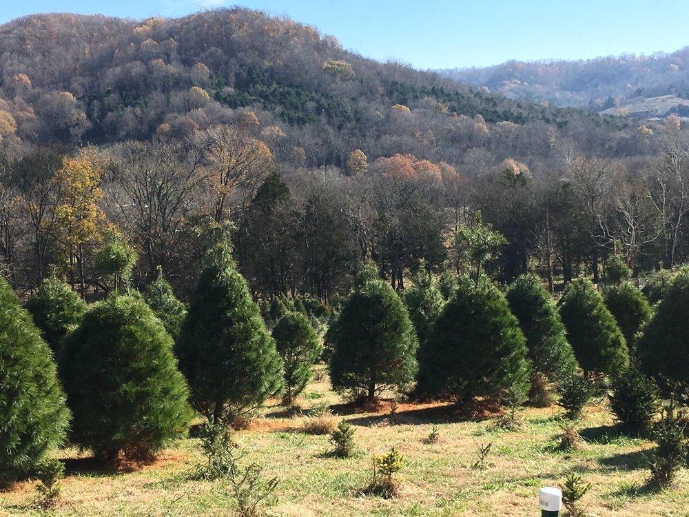 Wildwood Christmas Tree Farm: 286 La Paloma Rd, Woodbury, TN