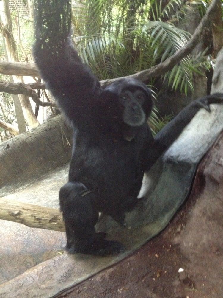 Find Restaurants Near Woodland Park Zoo