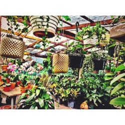 Photo Of Palmer S Garden Goods Orlando Fl United States Beautiful Selection