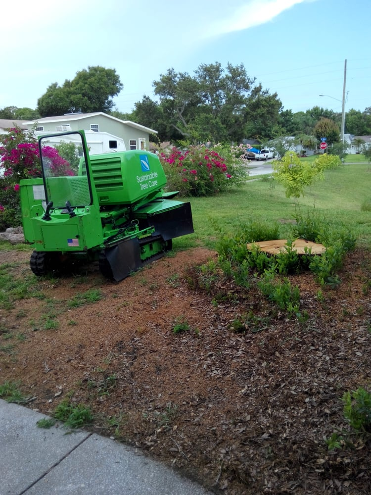 Sustainable Tree Care: 11000 53rd Ave N, St. Petersburg, FL