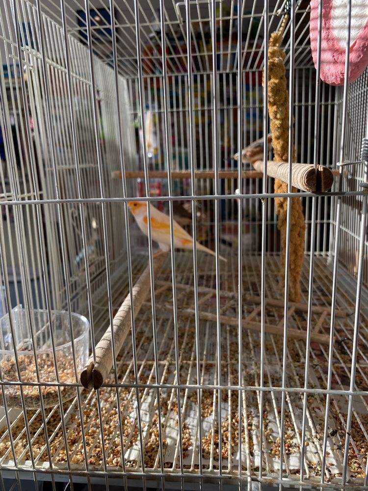Red Hill Pet Center