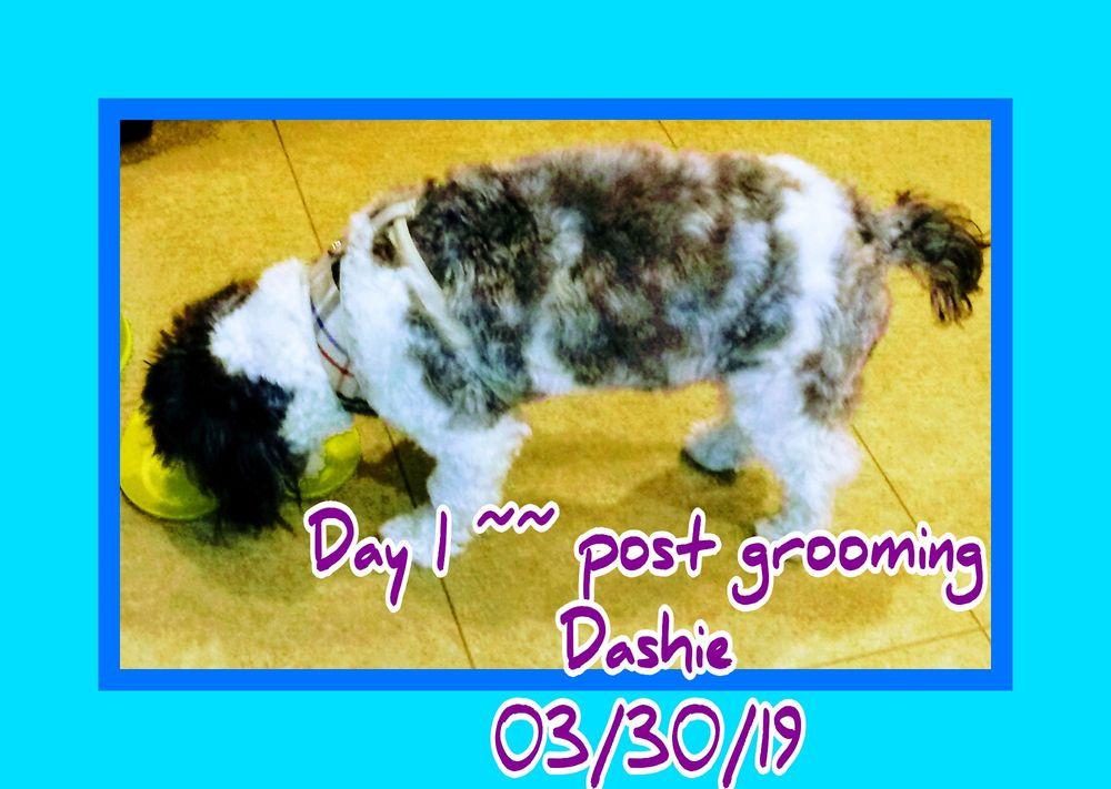 April's Doggie Spa And Training Center: 3219 McDowell Rd, Waynesboro, PA