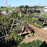 Photo Of Keep It Green Nursery Apollo Beach Fl United States