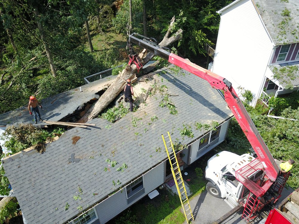 Tri-County Tree Service: Dowell, MD