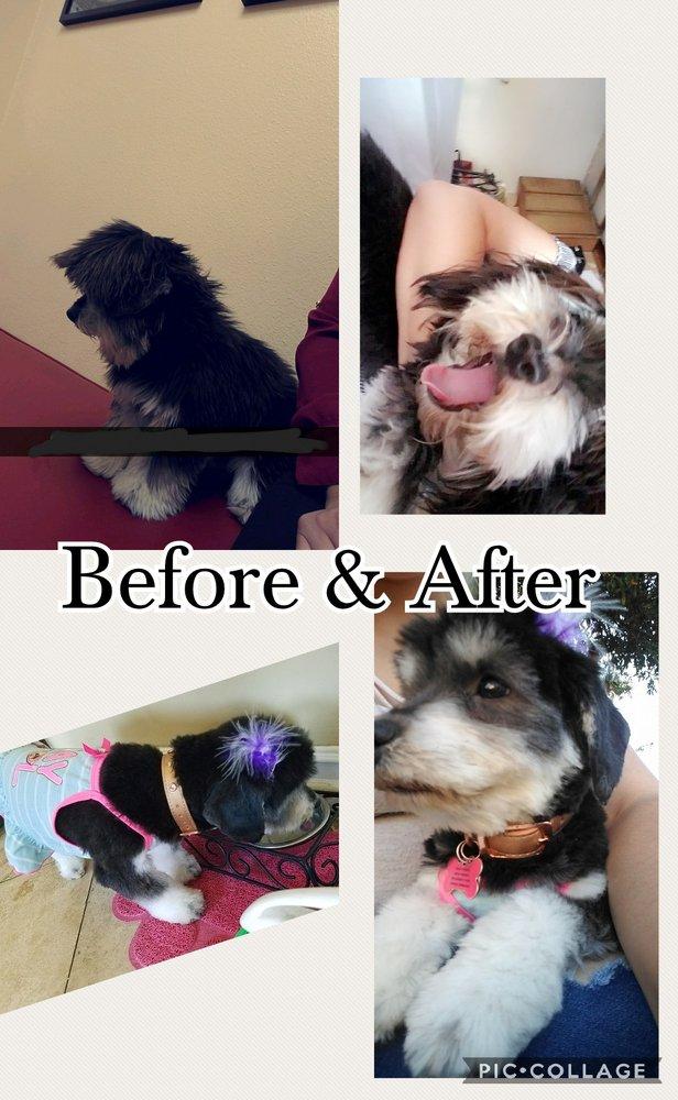 Viva La Pooch Pet Salon