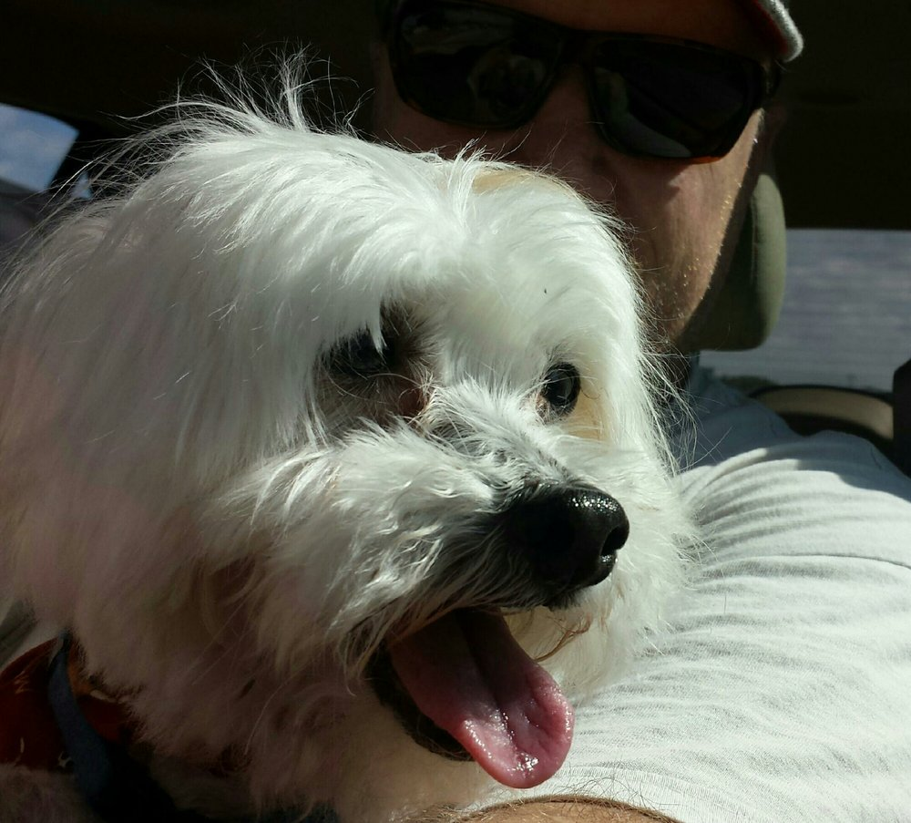Bow Wow Pet Resort: 830 E Colter Dr, Republic, MO