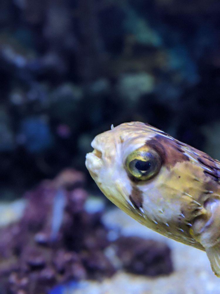 Mystic Aquarium: 55 Coogan Blvd, Mystic, CT