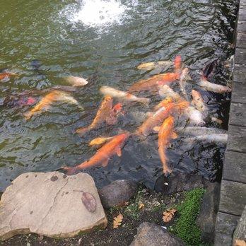 Japanese gardens 458 photos 85 reviews park for Japanese koi garden san jose