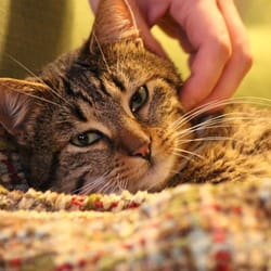 Orange Kittens For Sale In Ma