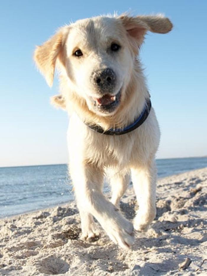Coastal Comfort Pet Sitting: 215 Brighton Woods Dr, Pooler, GA