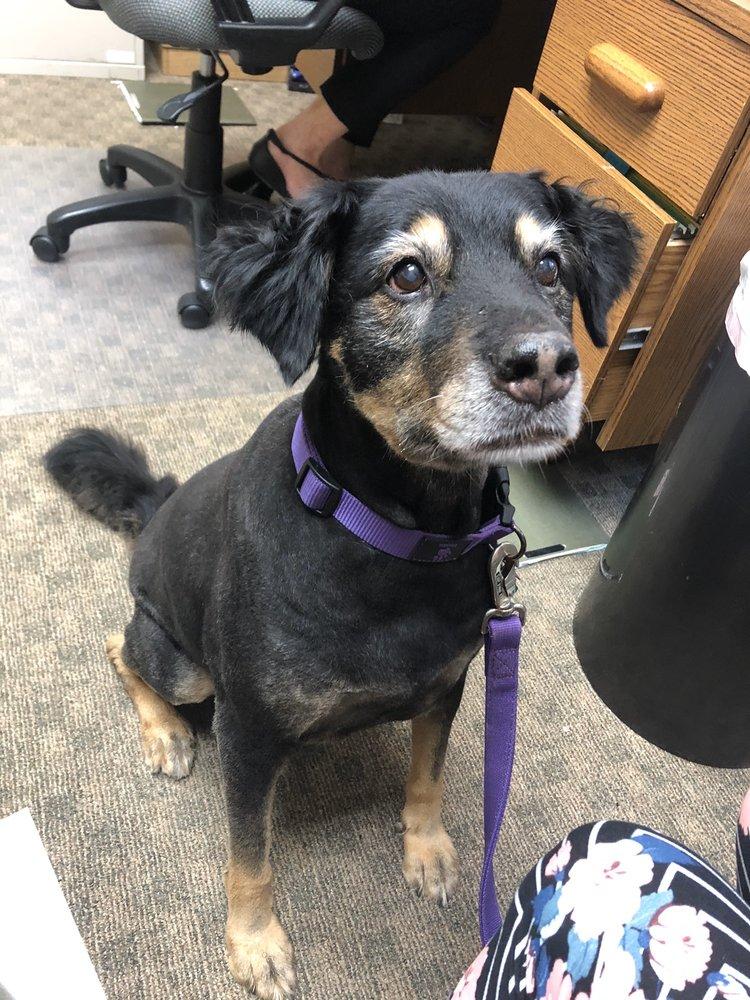 Lucky Dog Mobile Pet Grooming: 260 Meadow Dr, Alpharetta, GA