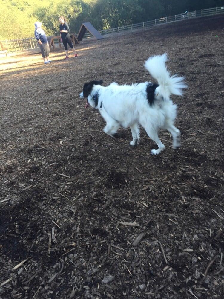 Mukilteo Off Leash Dog Park