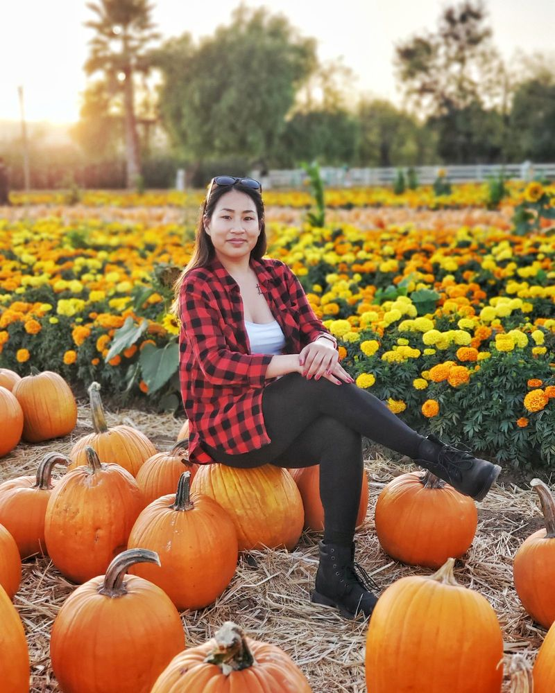 Uesugi Farms Pumpkin Park