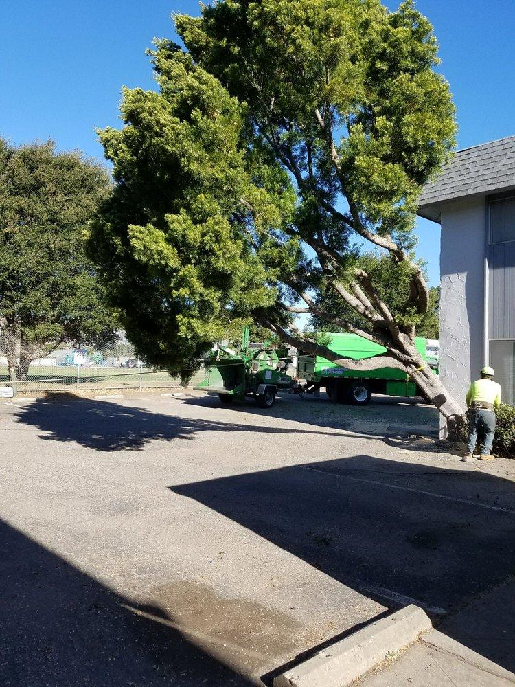 Bunyon Bros. Tree Service: 5345 Davenport Creek Rd, San Luis Obispo, CA