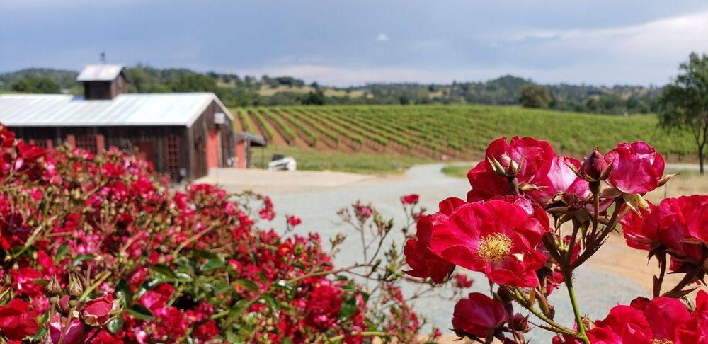 Karmere Vineyards & Winery: 11970 Shenandoah Rd, Plymouth, CA