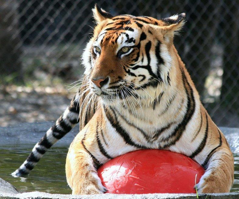 Big Cat Habitat Gulf Coast Sanctuary