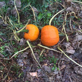 another pumpkin patch huntington tx