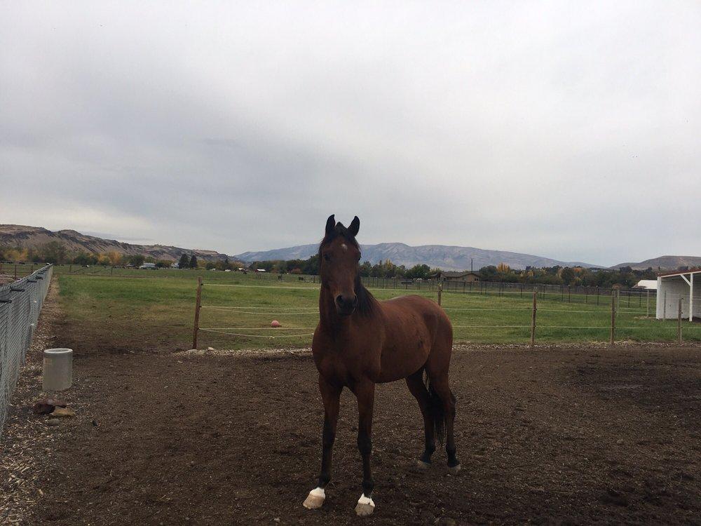Pegasus Project: 4680 US Hwy 12, Yakima, WA