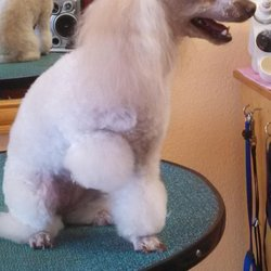 Bow Wow Barbers 14 Photos Pet Groomers 507 N Highway 77