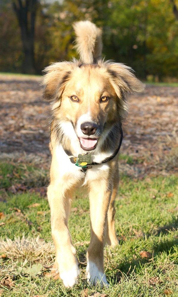 Vallejo Pet Services: 100 Heartwood Ct, Vallejo, CA