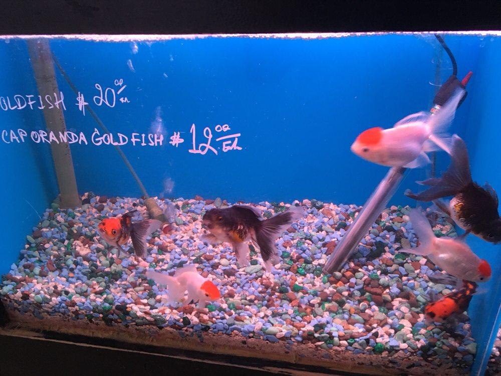 Grandpa goldfish yelp for 405 tropical fish