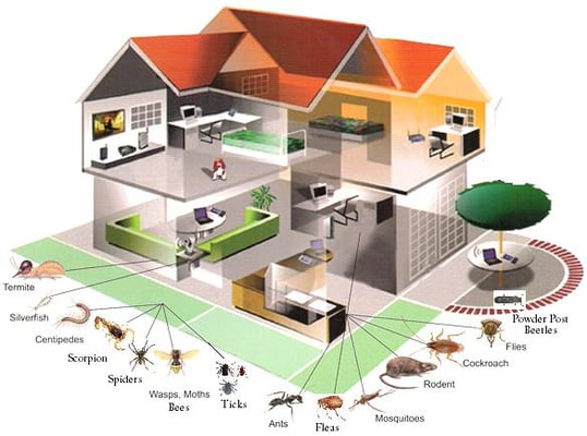 Double c pest control pest control 211 n center st for Total home control