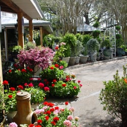 Photo Of Garden Gate Nursery   Gainesville, FL, United States. SEASONAL  FLOWERS