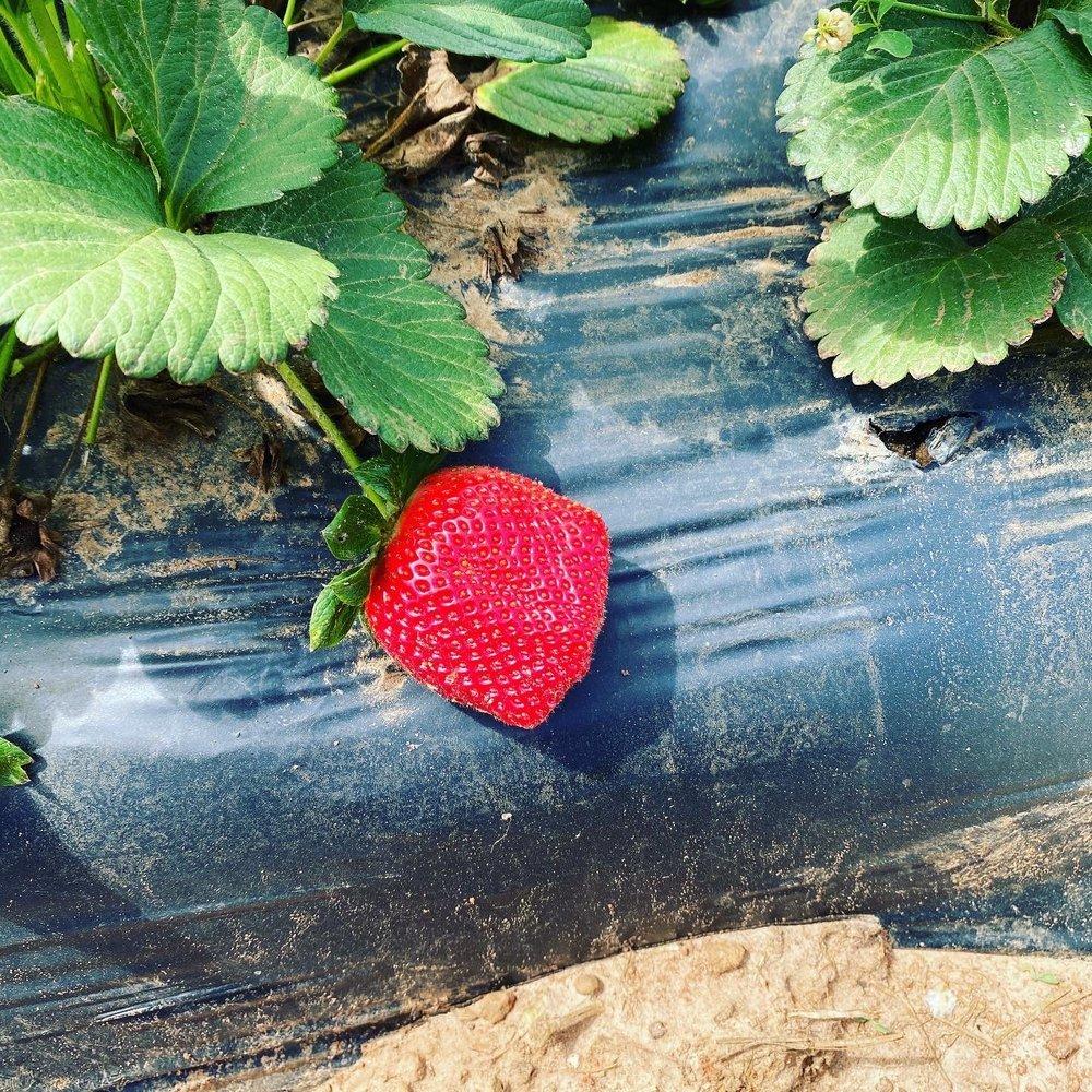 Moore Berries: 104 Grove Pl, Kathleen, GA