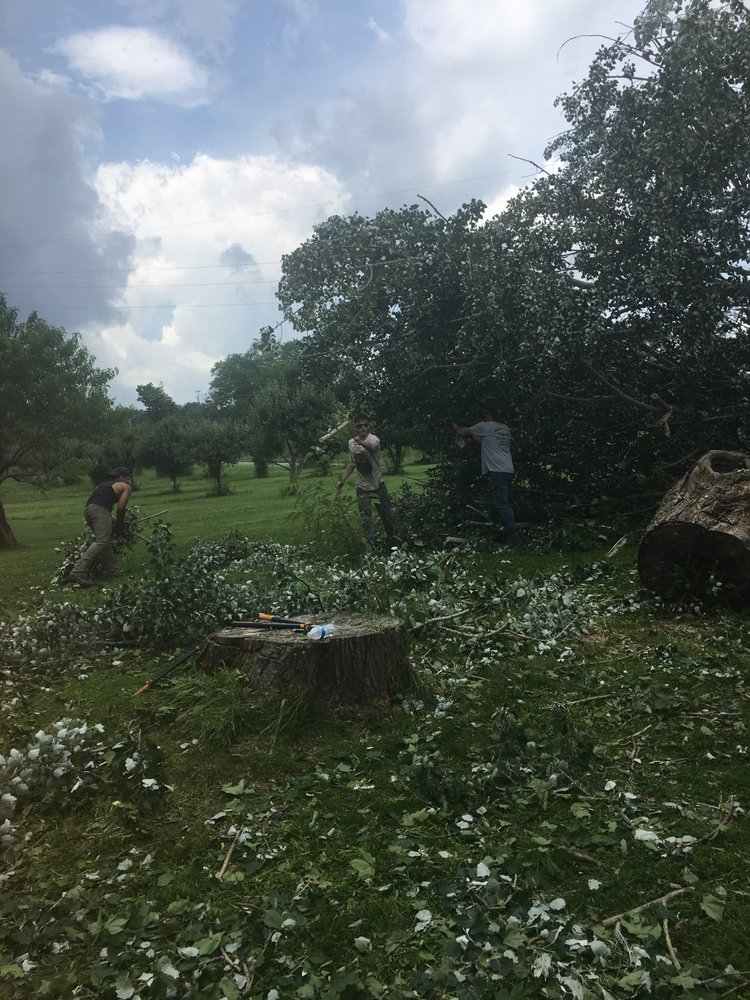 Walker Tree Services: Bessemer, PA