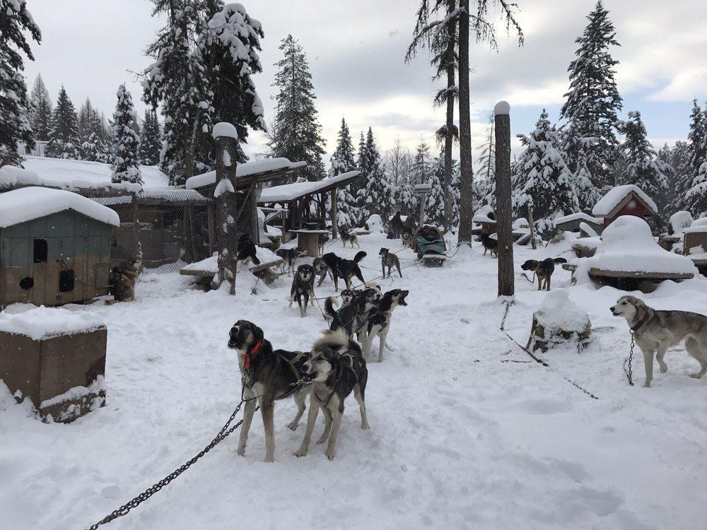 Dog Sled Adventures: 8400 Hwy 93 N, Olney, MT