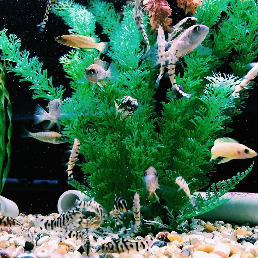 Fish Safari Virginia Beach Virginia
