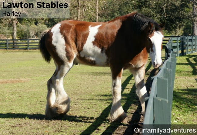 Lawton Stables Hilton Head Island Sc