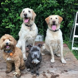 DogEvolve - 20 Photos & 66 Reviews - Pet Training - Lower Hills