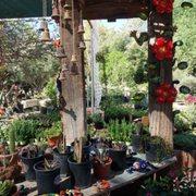 Beautiful Selection Of Photo Avocado Nursery Casa Grande Az United States