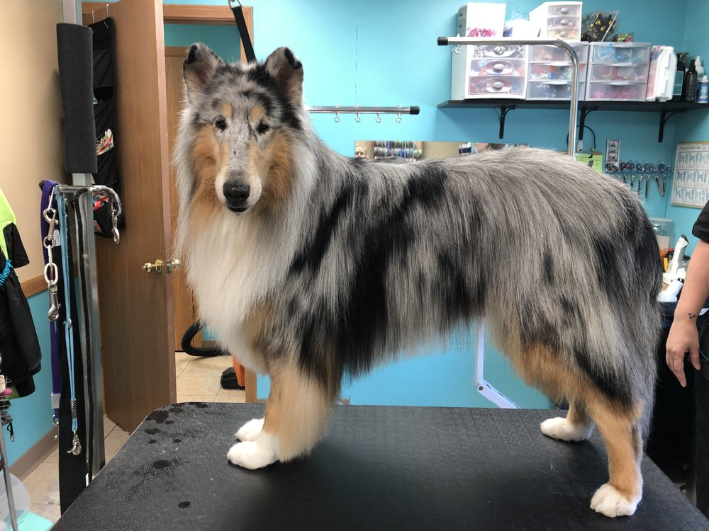 Pampered Paws-N-Claws: 3025 Main St, Claridge, PA