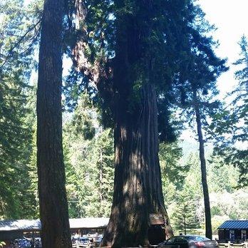 Drive-Thru Tree - 219 Photos & 117 Reviews - Parks - 67402 Drive ...