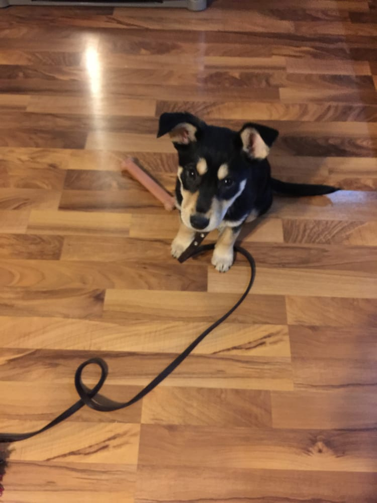 My Personal Dog Trainer: 207 E Sunset Ave, Lombard, IL