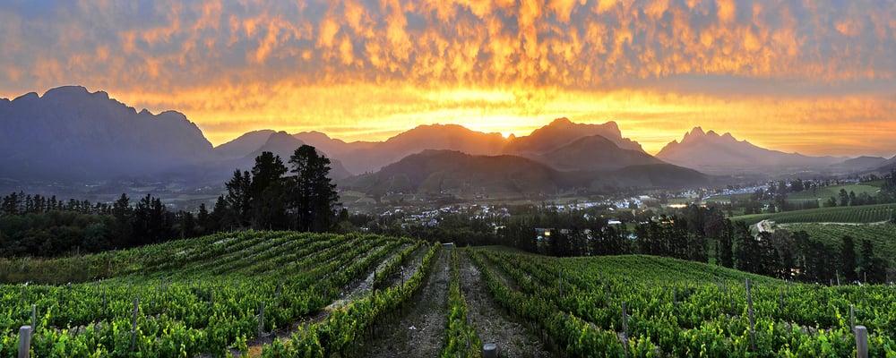 Wild Life Wine Safaris